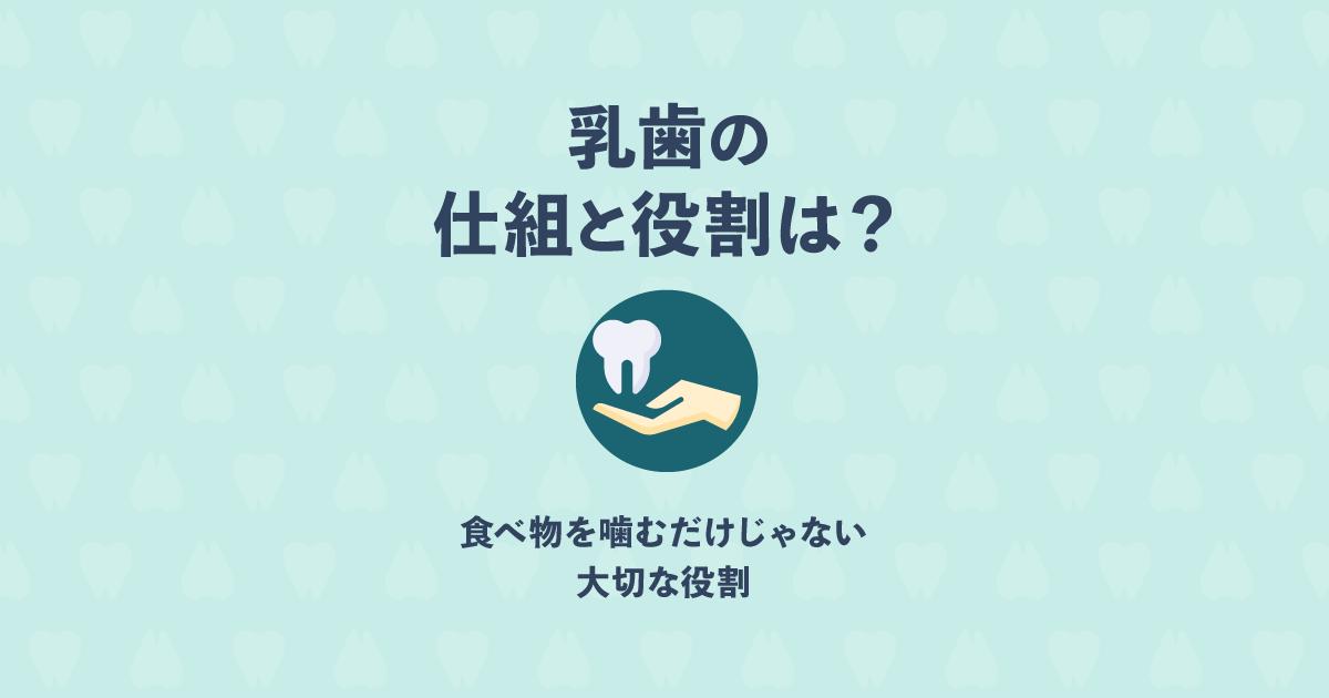 「乳歯」の仕組みと役割は?永久歯が正しく生えるためのガイド役!?